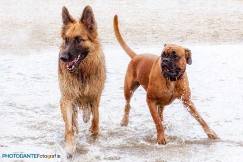 Hondenuitlaatservice Bedrijfsfotografie